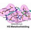 铂配合物通过构象调节硫酸乙酰肝素抑制转移
