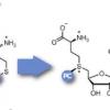 酶促光笼法研究通过DNA甲基化进行的基因调控