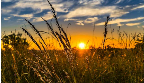 对基于作物的农业使用工程纳米材料的全系统成本和收益的分析