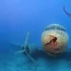 保护海洋物种是否成为统计学家的工作