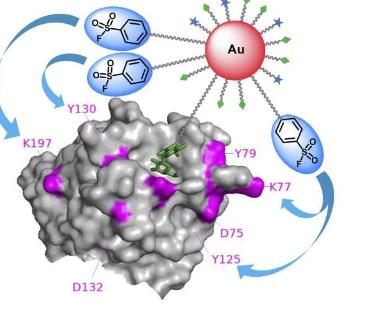 研究人员使用多价金纳米粒子开发高效分子探针