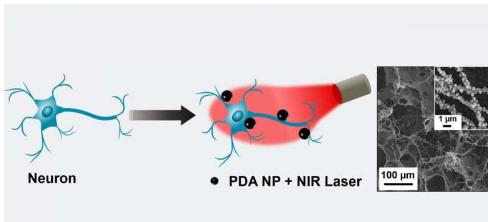 纳米粒子从光中产生热量来操纵神经元中的电活动