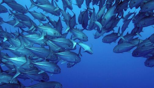 研究发现气候变化和过度捕捞导致全球渔业萎缩