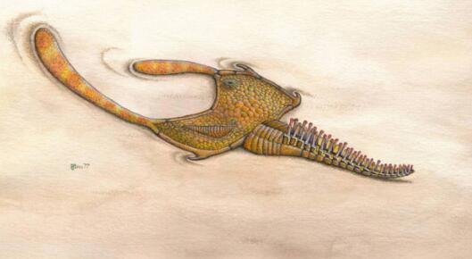 奇怪的古代海洋生物柔软的内脏揭示了它的真实身份